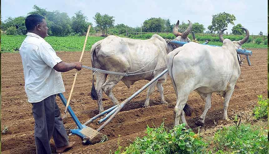 India-US engagement in agriculture could enhance trade ties
