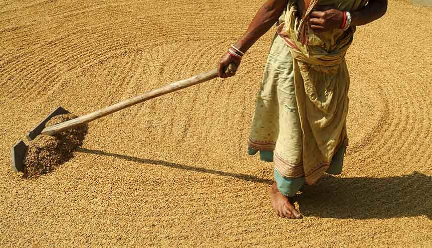 If Indian agriculture has to become part of the global supply chain, the farm sector in India has to get into a partnership with Indian and global industry.