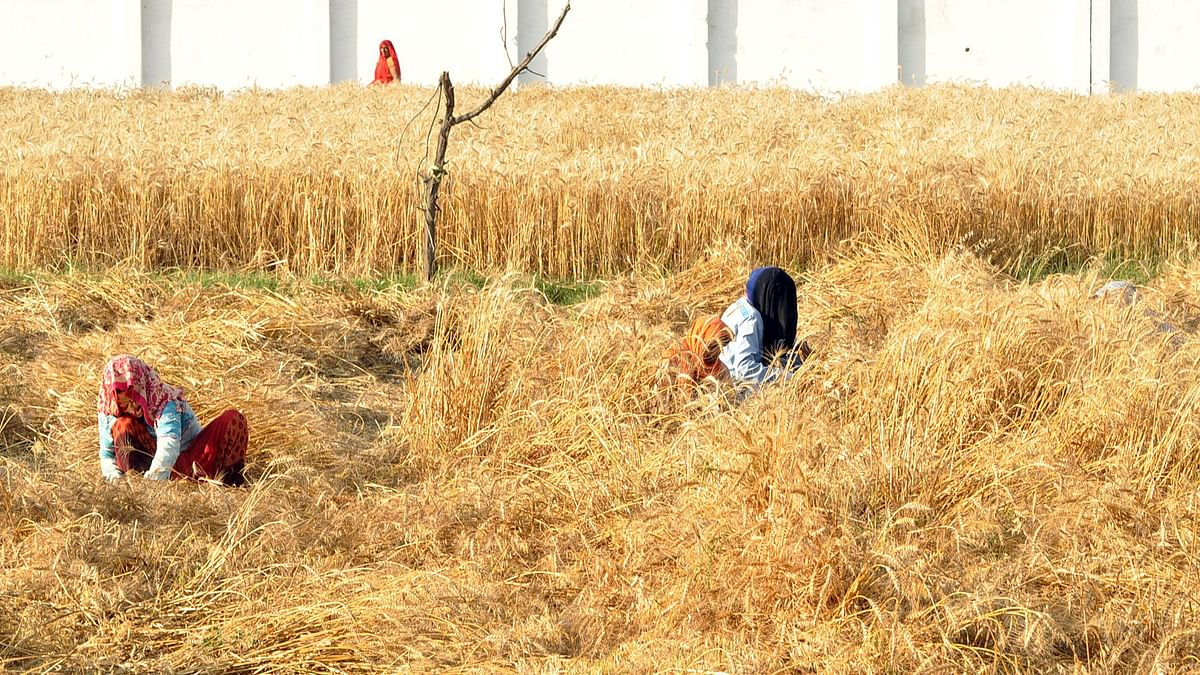 Farmers harvesting their crops in India. The government has passed laws related to farming reforms which brings the farmers and the private sector together in a win-win commercial arrangement.