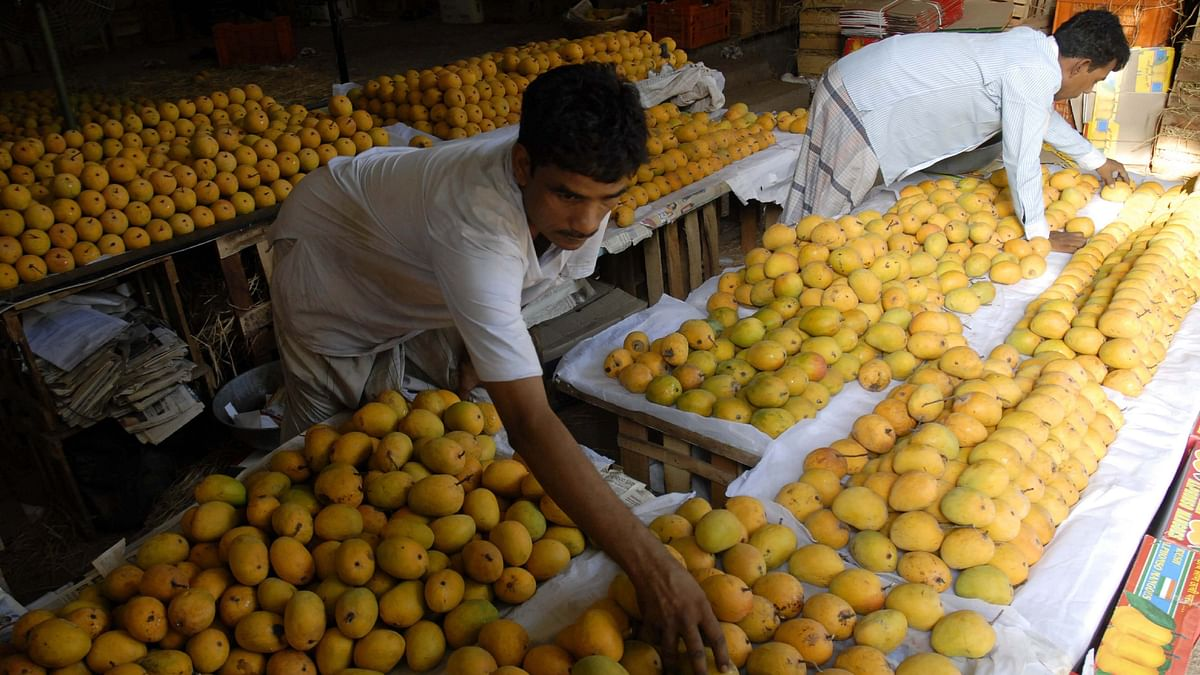 India recently shipped a consignment of 2.5 Metric Tonne of GI certified mangoes to South Korea, sourced from farmers in the Krishna and Chittor districts of Andhra Pradesh.