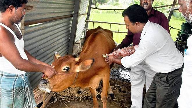 Cabinet gives Rs 13,343 cr to vaccinate animals