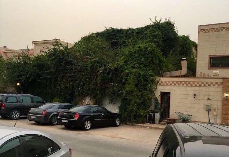 Temperatures hit 50˚C in Saudi Arabia