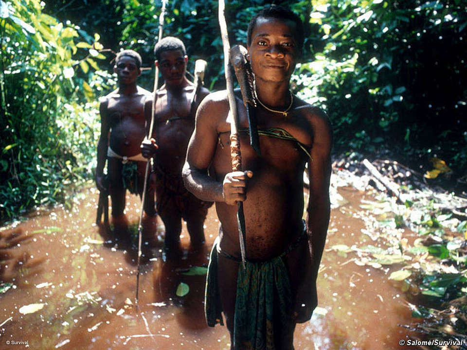 Why are the African rainforest hunter-gatherers the smallest humans on Earth?