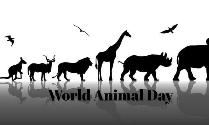 Bhavans SIS of KG Wing celebrates Animal Day