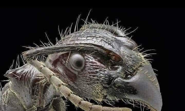Have you seen the face of an ant up close?? Like real, real, real close?????