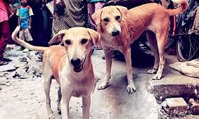 Delhi to get its first crematorium for animals with proper rituals with a dedicated priest