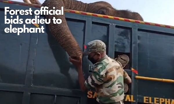 Mudumalai forest official bids adieu to deceased elephant in emotional video