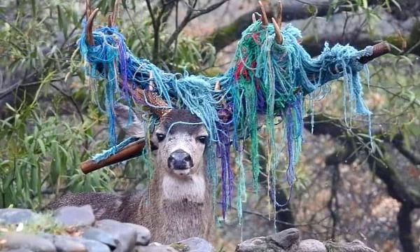 Deer spends six months with hammock stuck to his antlers, finally rescued