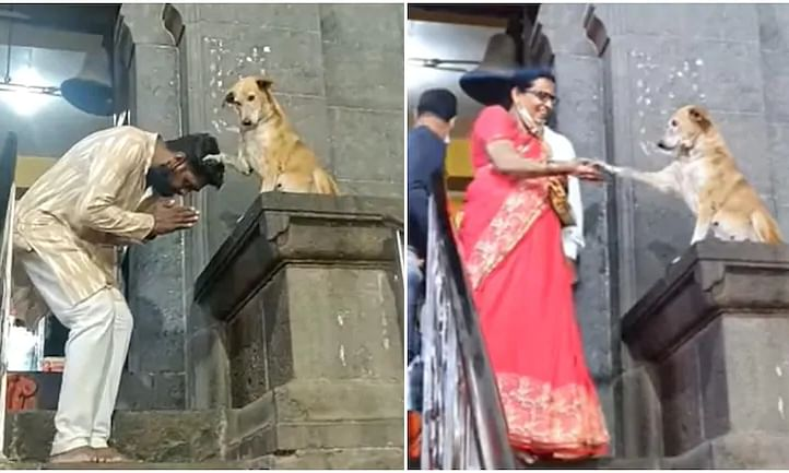 Dog blesses devotees and shakes hands outside temple in Maharashtra