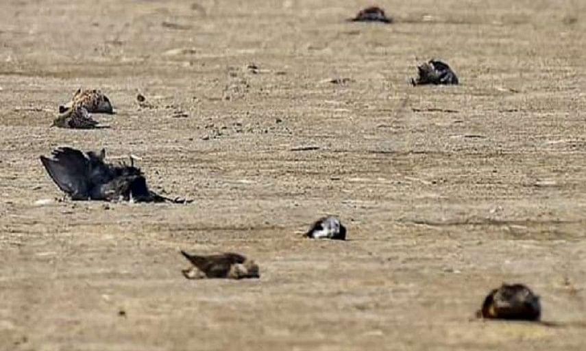 Bird flu alert in Rajasthan after death of hundreds of crows