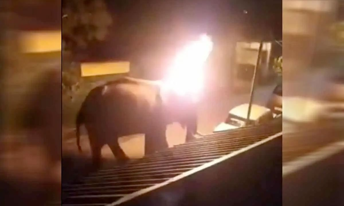 Horrific: Elephant dies after being set on fire, video goes viral
