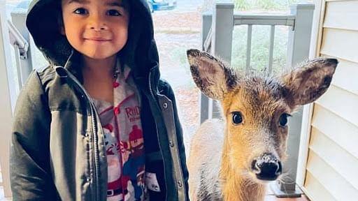 Adeerable viral pic: 4 YO befriends baby deer, brings back home for cereal