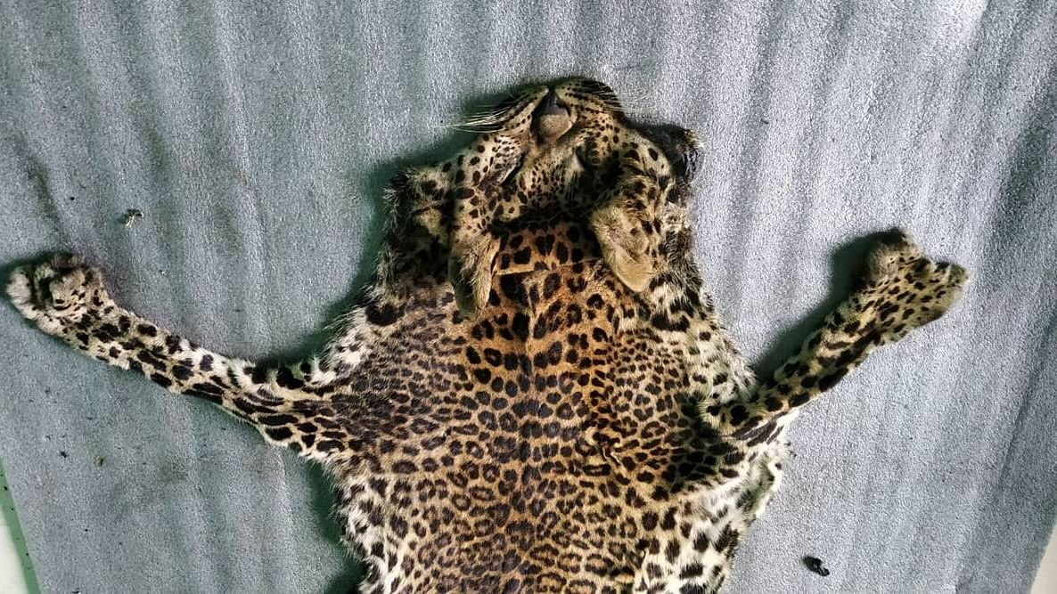 Kerala shocker: Five barbarians brutally slaughter, eat leopard after trapping it; arrested