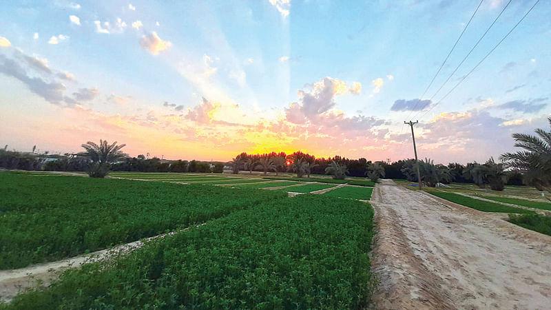 Kuwait's Wafra: A bucolic getaway