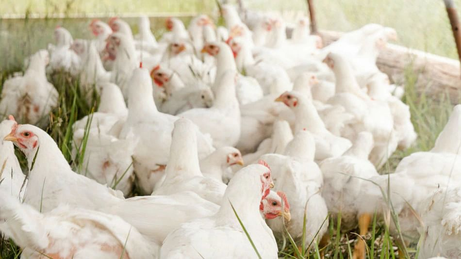 Russia confirms first case of human infection with AH5N8 bird flu