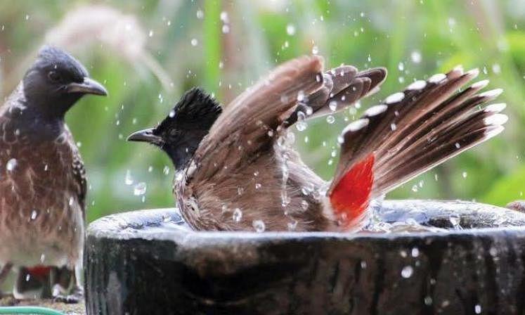 A native Saudi's kind initiative helps animals, birds beat the heat