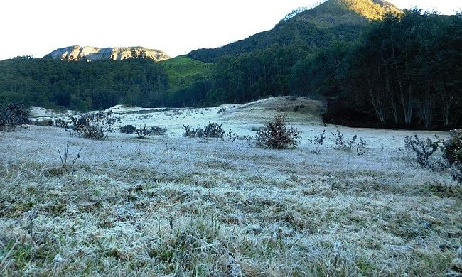 As temperature drops below zero, layer of frost covers plants in Munnar