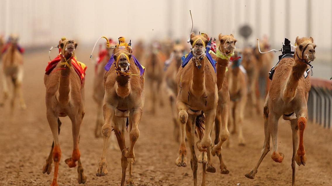 UAE | The first-ever female camel riding team kicks off