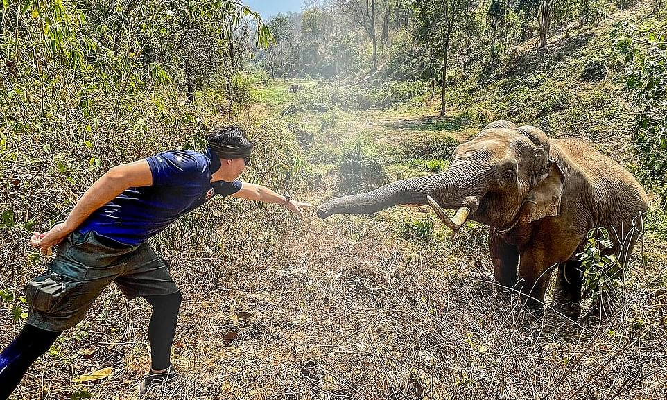 What happened when an elephant had an unexpected reunion with a vet?