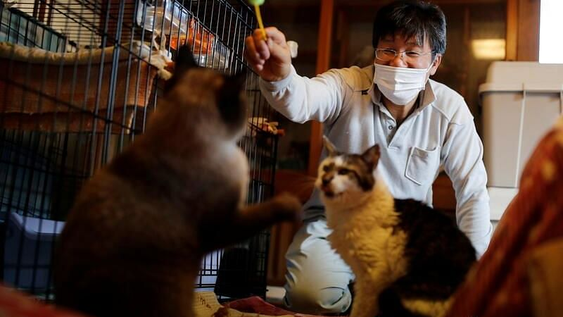 'I don't want to leave': Japanese man stayed back in Fukushima nuclear zone to take care of abandoned cats