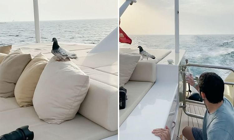Sheikh Hamdan quenches pigeon's thirst in the middle of the sea