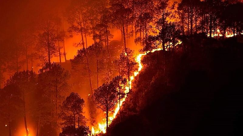 No loss of life in the Similipal National Park fire: Odisha govt