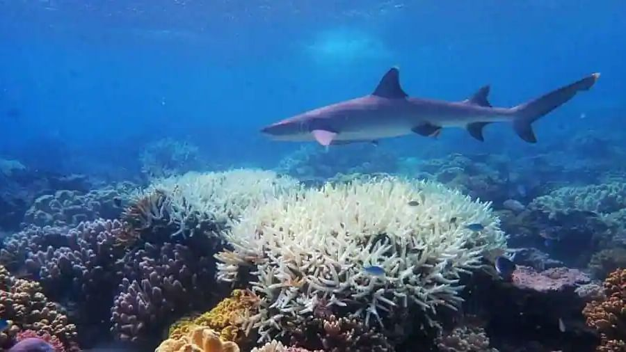 'Cloud brightening' technology can save Great Barrier Reef