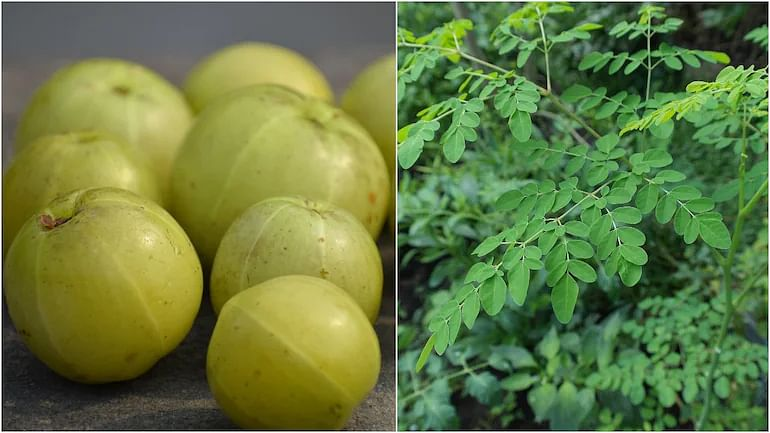 Build your immunity to fight Covid: Amla and Moringa leaves shot