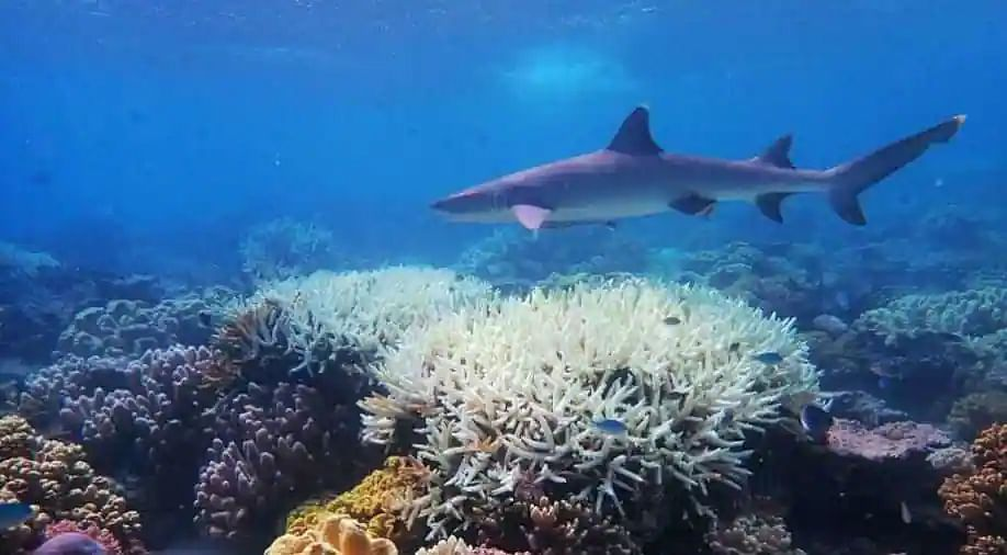 Since 1950s, coral cover reduced by half in world, finds report
