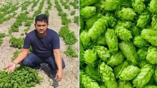 At ₹1 Lakh/Kg, this Bihar farmer is growing world's costliest vegetable