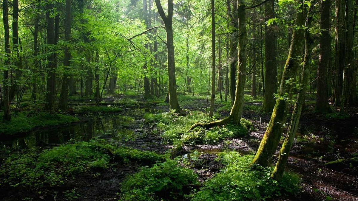 Viral video: Creepy video of a forest breathing has Twitter freaking out, here's the science behind it