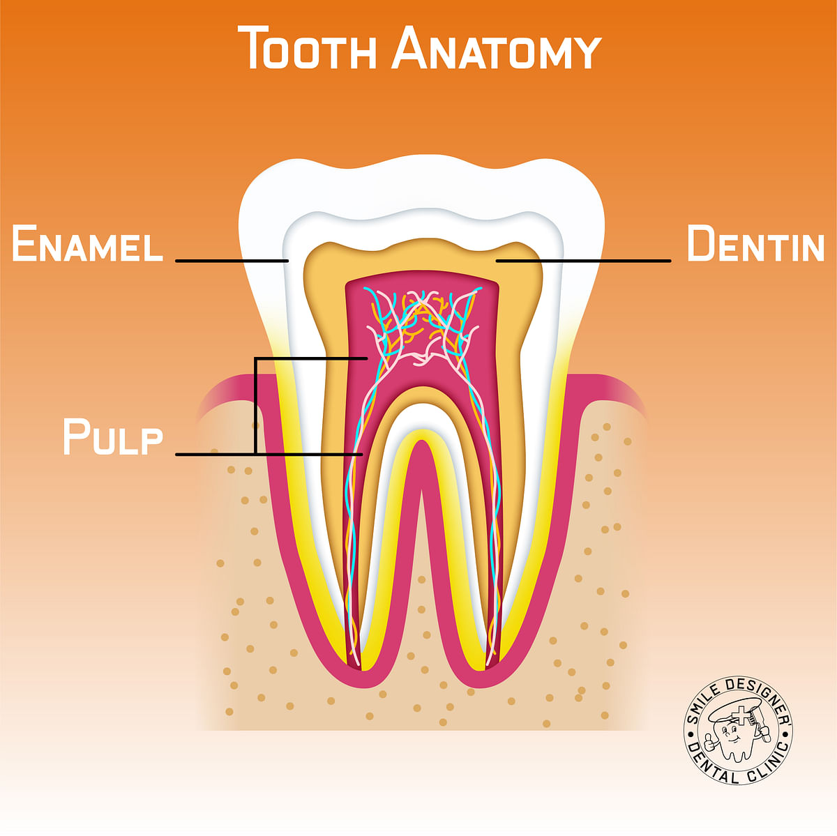 What constitutes a tooth