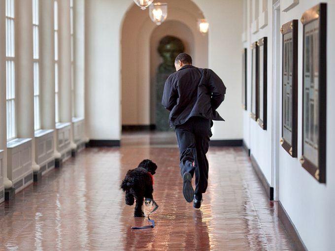 Obama family's dog, Bo, passes away of cancer