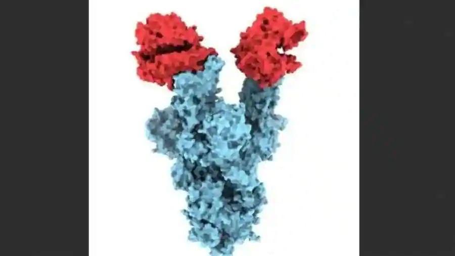 UK variant: First images of B.1.1.7 coronavirus mutation