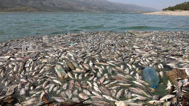 Tonnes of dead fish wash up on shore of polluted lake in Lebanon