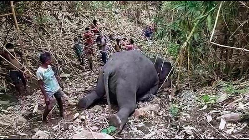 18 elephants killed in lightning strikes in Assam's Nagaon