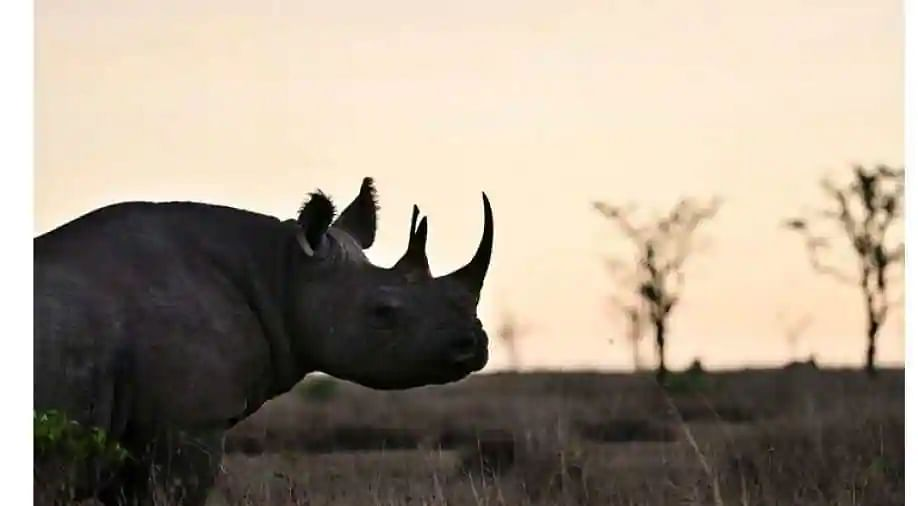 First endangered white rhino born at Sharjah Safari Park