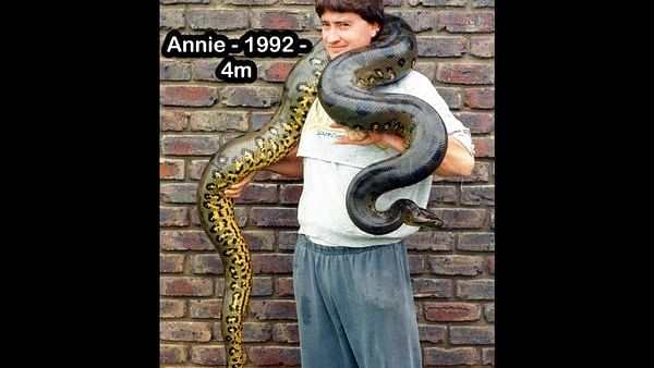 'Annie' the anaconda sets Guinness World Record as the oldest living snake in captivity