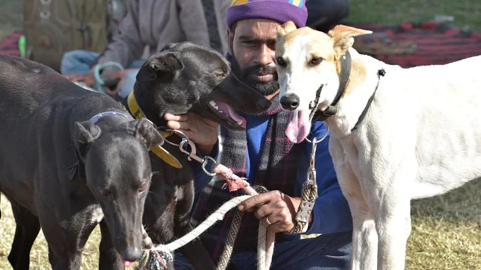 License must for pet, domestic animals: HC