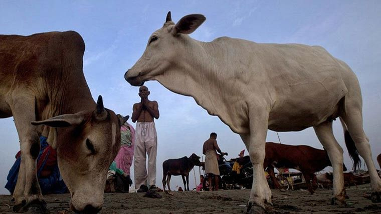 Assam govt to introduce cattle preservation bill in Assembly next week