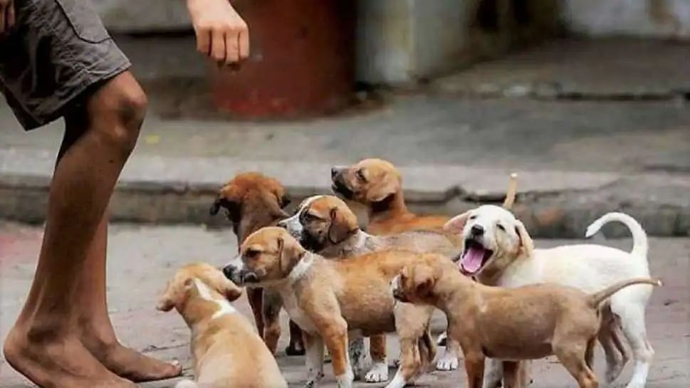 Street dogs have right to food, it is citizens' moral responsibility to protect animals: Delhi HC