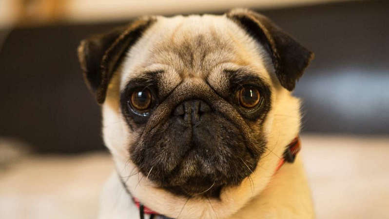 Dogs can recognize liars and dishonest people, says this Japanese study