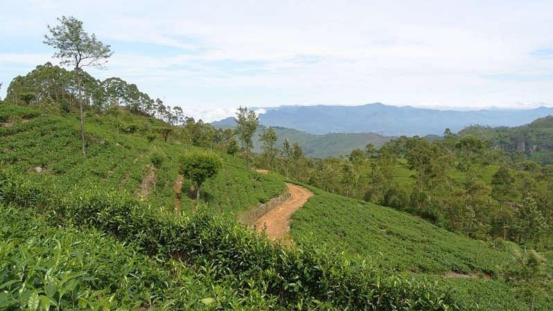 How Sri Lanka's overnight flip to total organic farming has led to an economic disaster