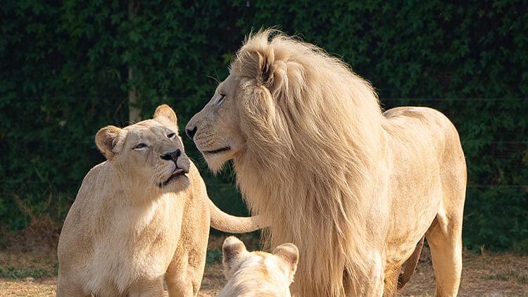 Dubai Safari Park set to welcome visitors from Sept.27