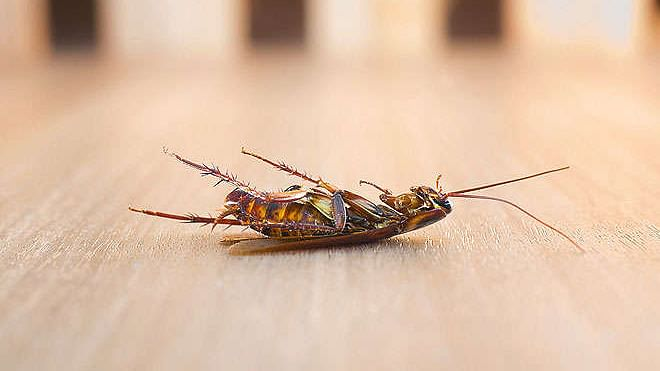 Struggling with cockroaches in your kitchen? Try these tips to remove them