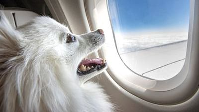 Luxury and Peace: Indian passenger books entire business class cabin for his pet dog