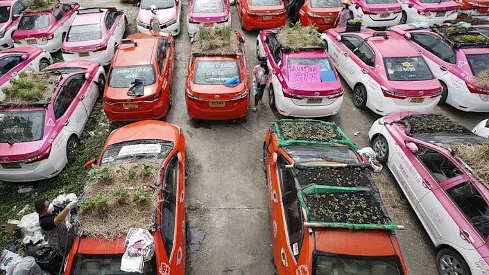 Bangkok locals convert 'taxi graveyard' into vegetable gardens