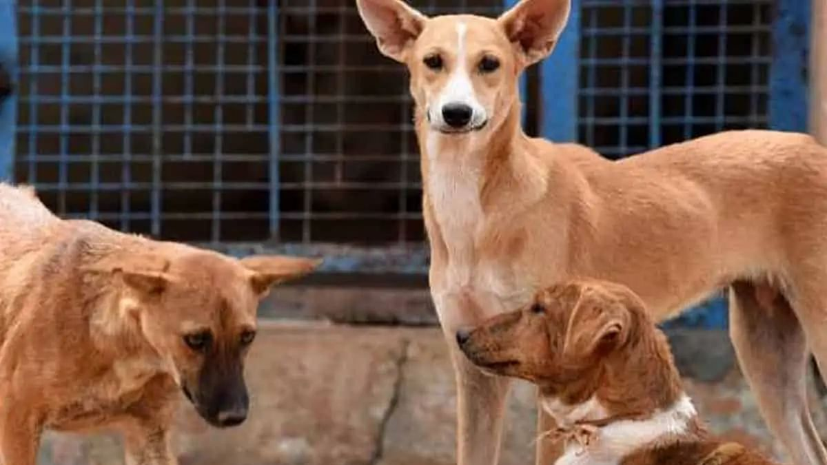 12 arrested for burying 150 stray dogs alive in Karnataka