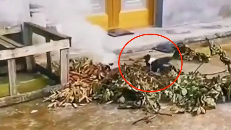 This raven put out a fire and the internet can believe it