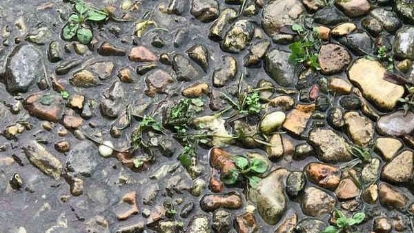 Can you spot the frog hiding between rocks and leaves in this picture?